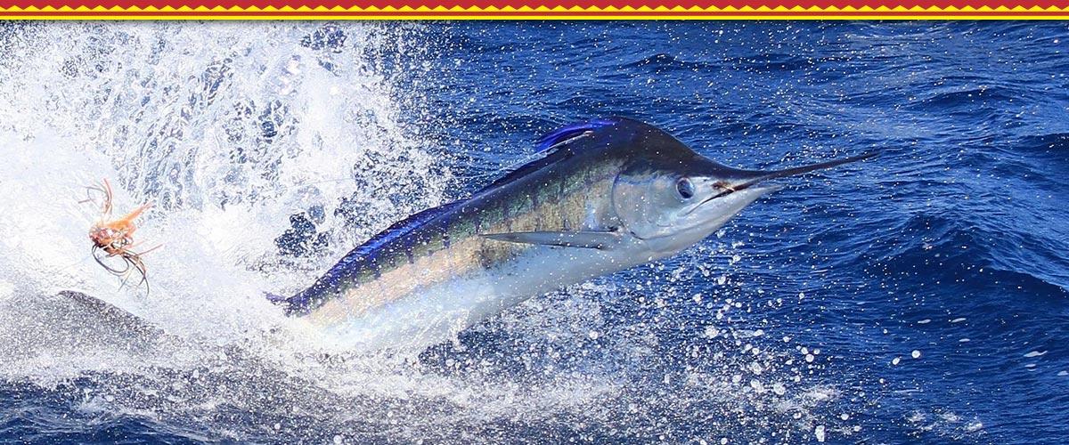 Kauai Activities - Fishing